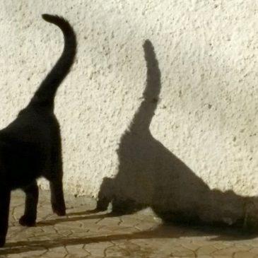 Puma, oder die Aufregung im Leben einer Katze