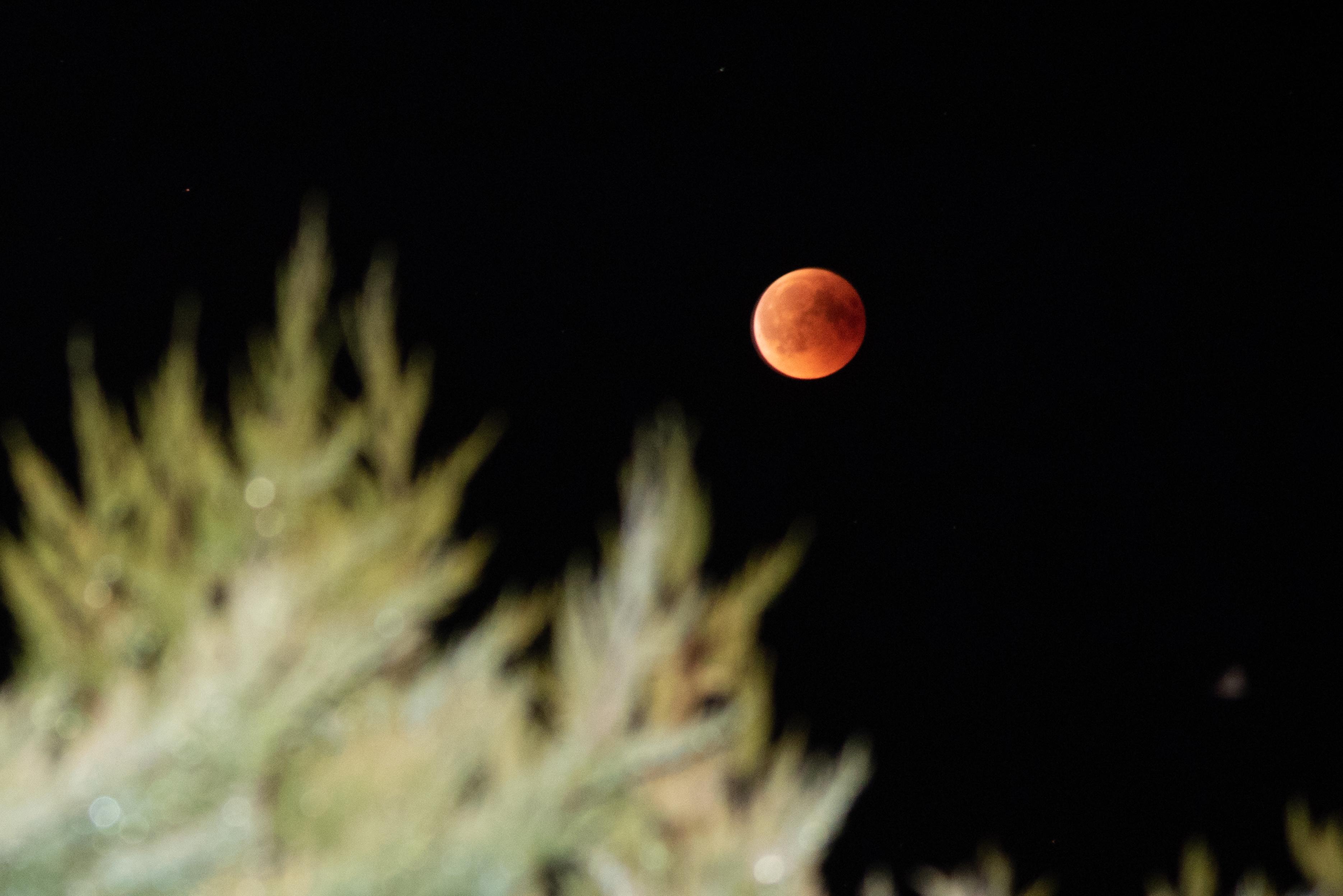 In der Nacht von Freitag auf Samstag (27./28. Juli) war die totale Mondfinsternis in Großpösna zu sehen.