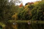 Herbst im Muldetal (5).jpg