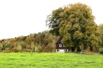 Herbst im Muldetal (6).jpg