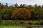 Herbst im Muldetal (8).jpg