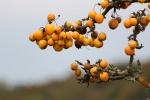 Herbst im Muldetal (9).jpg
