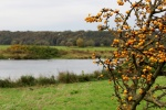 Herbst im Muldetal (10).jpg